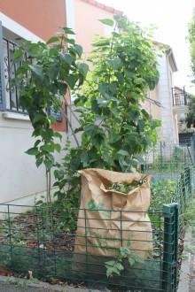 Collecte des déchets végétaux - crédit : Est Ensemble