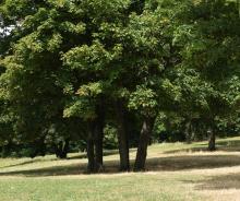 Boisements parc des Beaumonts - crédits : Direction de la communication / Hervé Boutet